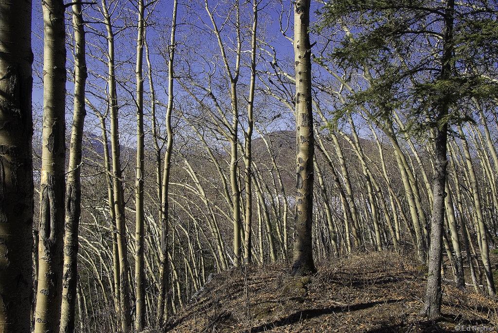 Wind bent trees 040910.02.1024
