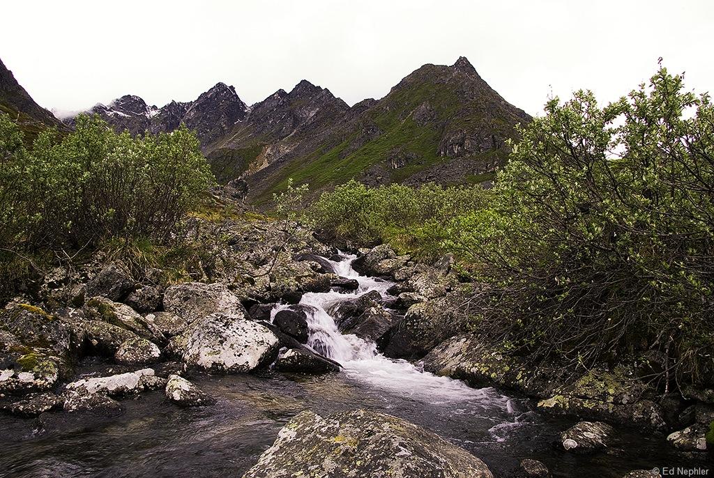 Fairangel Creek 061810.03.1024