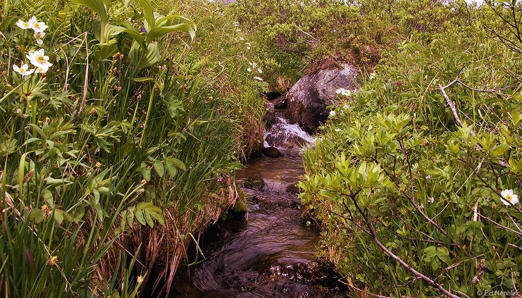 Small Creek 070710.01.1024