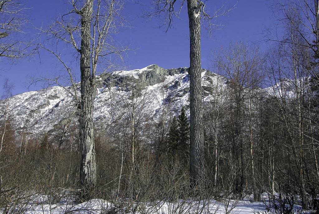 Woods Views 032619.02.1024