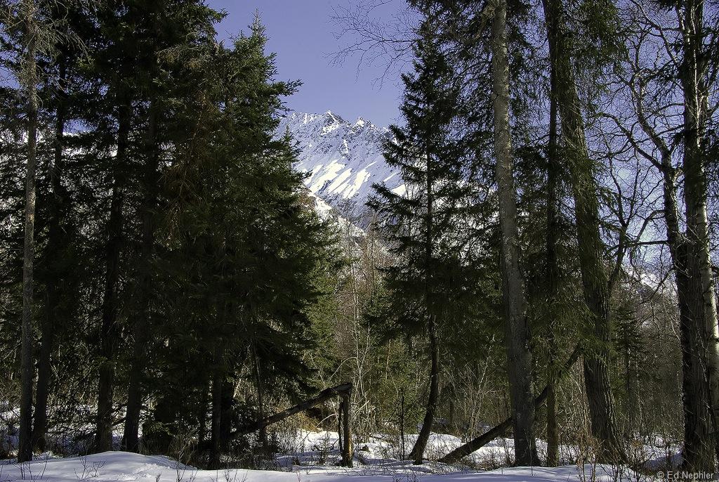 Woods Views 032619.03.1024