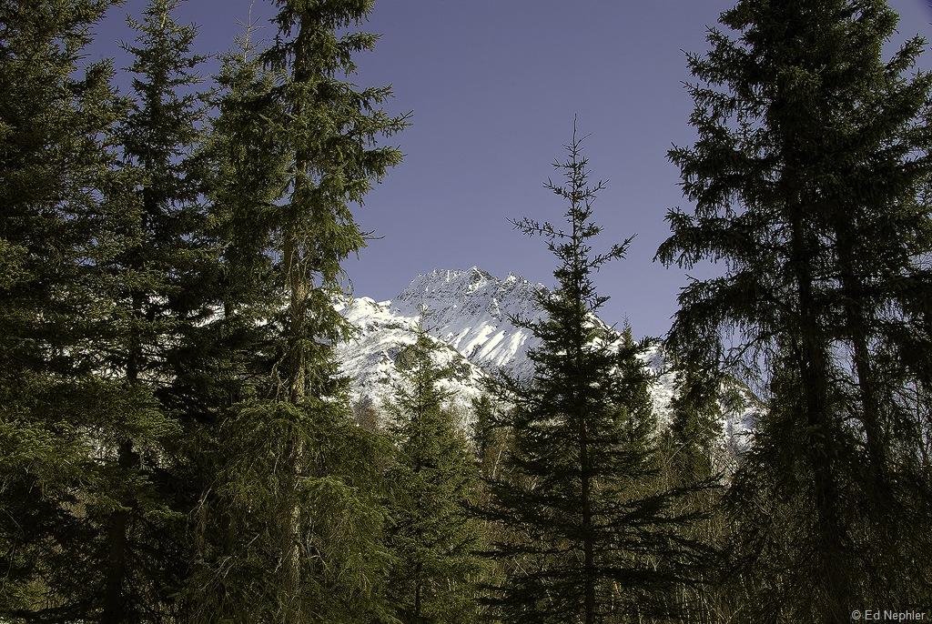 Woods Views 032619.05.1024