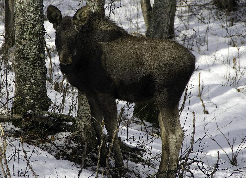 Moose 041410.03.1024