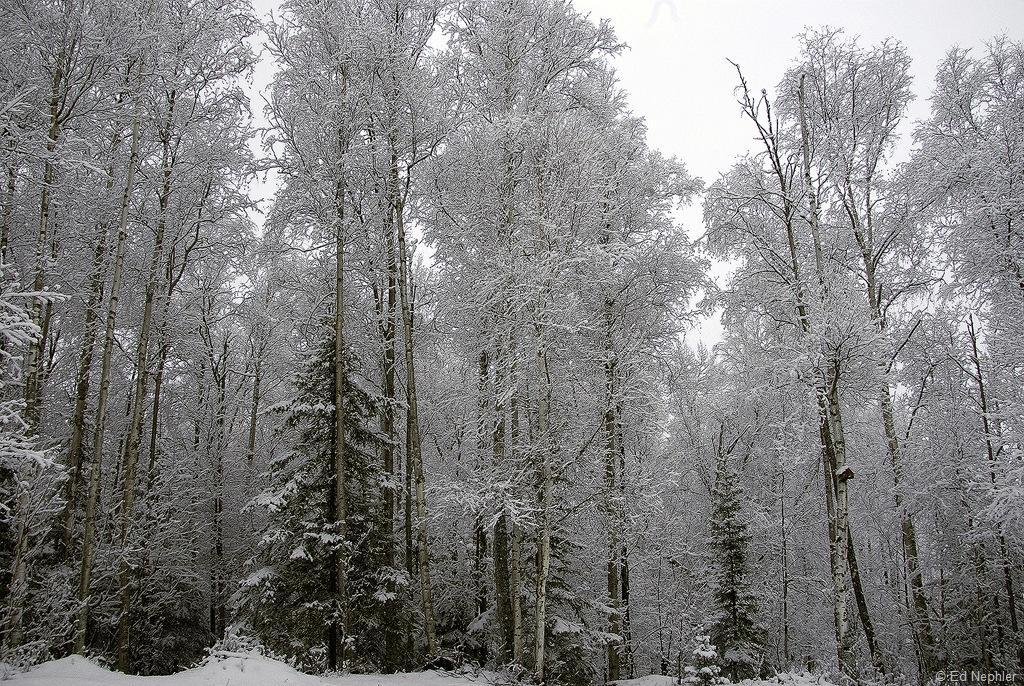 Snow 041310.01.1024