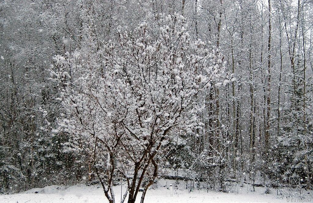 Snow-042210.04.1024