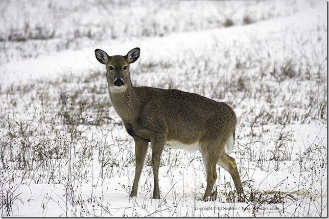 Deer 033113.01.1024