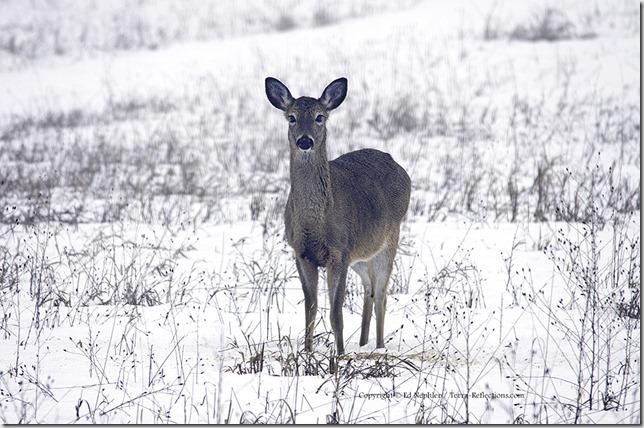 Deer 033113.02.1024