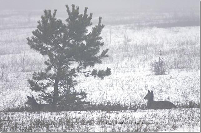 Deer 033113.03.1024