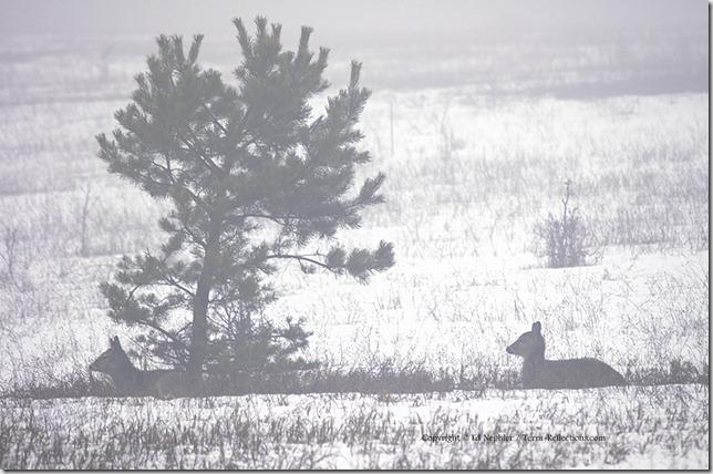 Deer 033113.04.1024