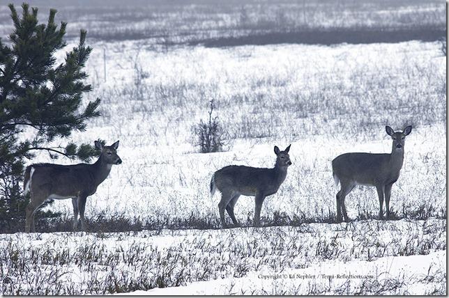 Deer 033113.05.1024