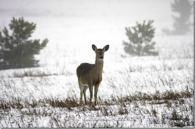Deer 033113.06.1024