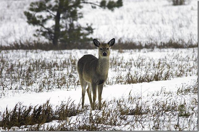 Deer 033113.07.1024