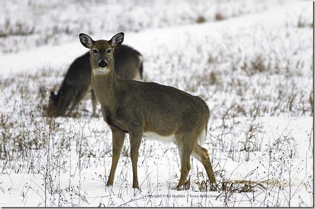 Deer 033113.08.1024
