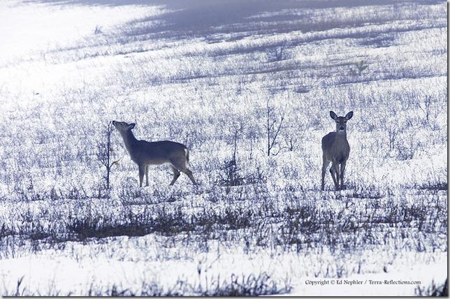 Deer 033113.09.1024