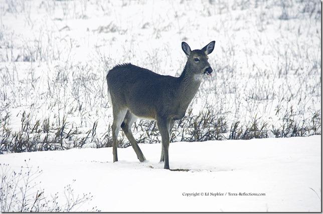 Deer 033113.10.1024