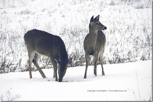 Deer 033113.11.1024