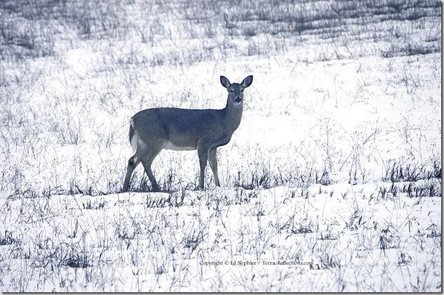 Deer 033113.13.1024