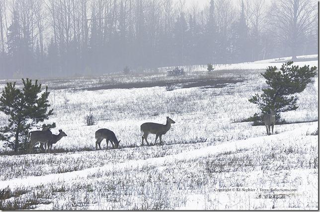 Deer 033113.14.1024