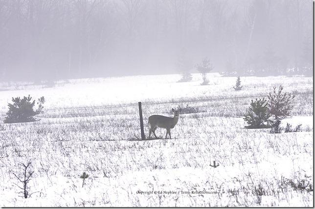 Deer 033113.16.1024