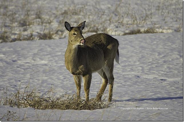 Deer 040213.02.1024