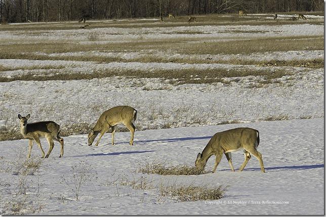 Deer 040213.03.1024