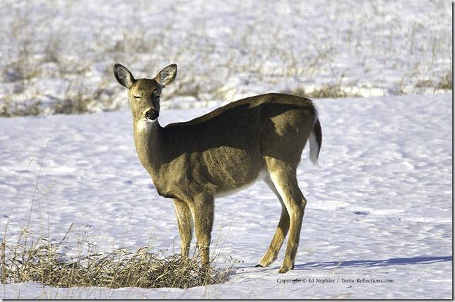Deer 040213.04.1024