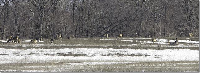 Deer 040313.01.1024