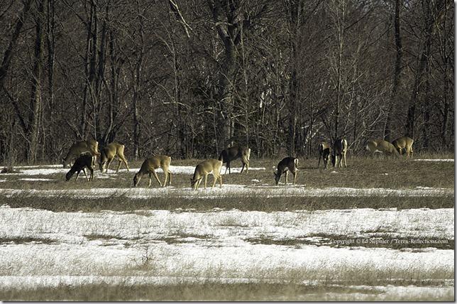 Deer 040313.02.1024
