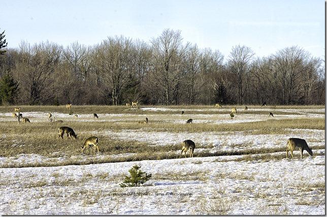 Deer 040313.04.1024