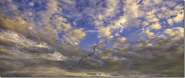 Geese Flying into The Sunset 060613.02.1024