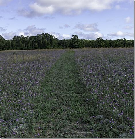 Path of Blue 072813.01.1024