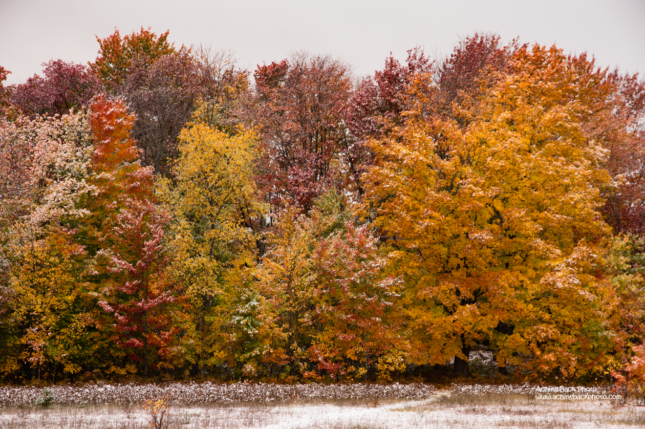 Autumn Colors and Snow 101715.01.1260
