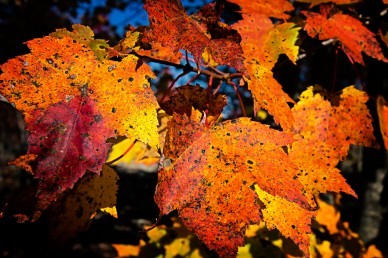 Fall Colors 101115.02.1260