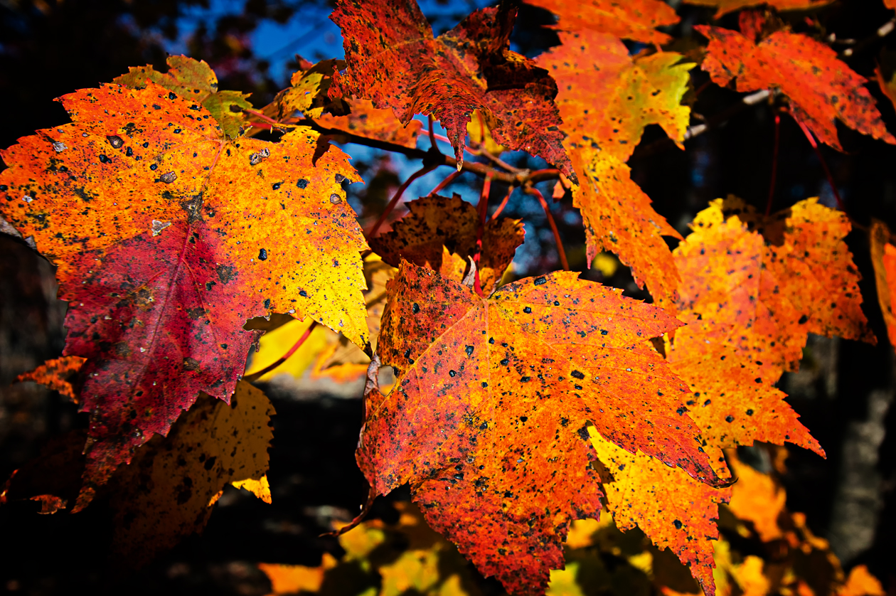 Fall Colors 101115.02.1260